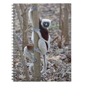 Madagascar, Ankarafantsika Reserve; Ampijoroa; Notebook