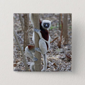 Madagascar, Ankarafantsika Reserve; Ampijoroa; Pinback Button