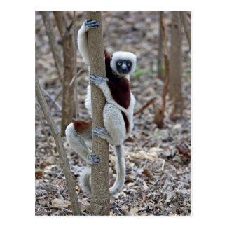 Madagascar, Ankarafantsika Reserve; Ampijoroa; Postcard