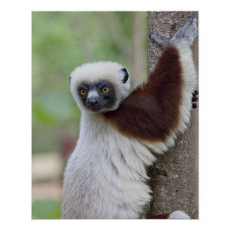 Madagascar, Ankarafantsika Reserve, Ampijoroa. Print