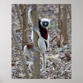 Madagascar, Ankarafantsika Reserve; Ampijoroa; Posters