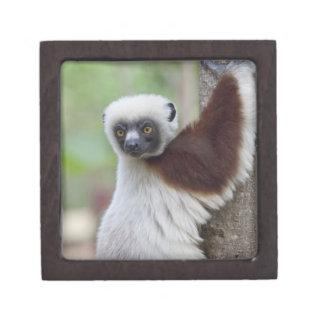 Madagascar, Ankarafantsika Reserve, Ampijoroa. Premium Trinket Box