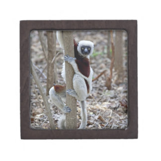 Madagascar, Ankarafantsika Reserve; Ampijoroa; Premium Gift Box