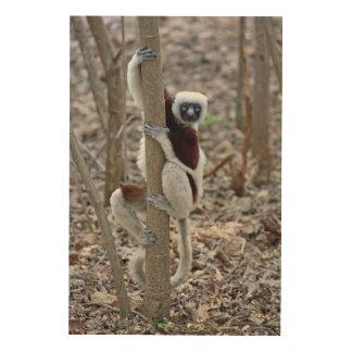 Madagascar, Ankarafantsika Reserve; Ampijoroa; Wood Canvases