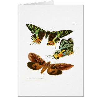 Madagascar Butterflies Card