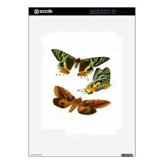 Madagascar Butterflies Decals For The iPad 2