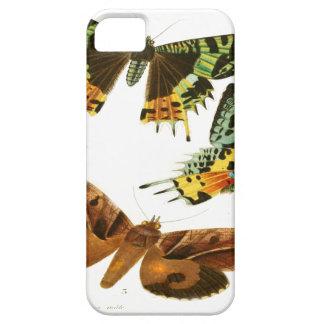 Madagascar Butterflies iPhone SE/5/5s Case