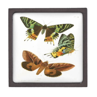 Madagascar Butterflies Keepsake Box
