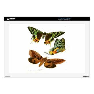 Madagascar Butterflies Laptop Decals