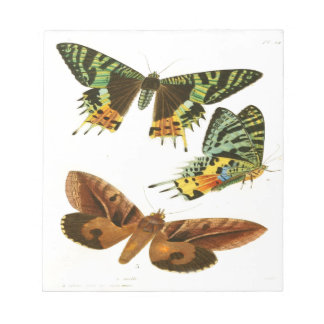 Madagascar Butterflies Notepad