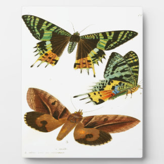 Madagascar Butterflies Plaque
