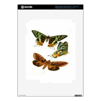 Madagascar Butterflies Skins For iPad 3