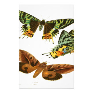 Madagascar Butterflies Stationery