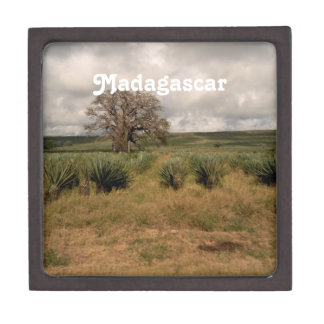 Madagascar Countryside Premium Trinket Box