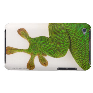 Madagascar day gecko (Phelsuma madagascariensis 2 Case-Mate iPod Touch Case