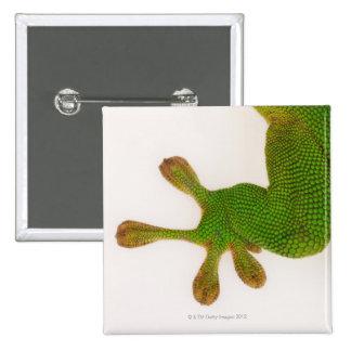 Madagascar day gecko (Phelsuma madagascariensis 2 Pinback Button