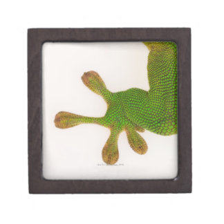 Madagascar day gecko (Phelsuma madagascariensis 2 Premium Keepsake Box