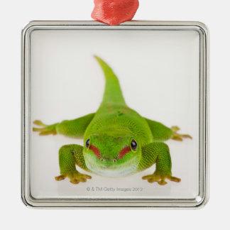 Madagascar day gecko (Phelsuma madagascariensis) Christmas Ornament