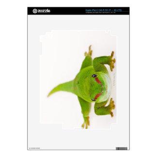 Madagascar day gecko (Phelsuma madagascariensis) iPad 3 Skins