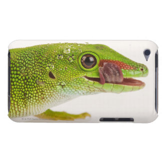 Madagascar day gecko (Phelsuma madagascariensis iPod Touch Case