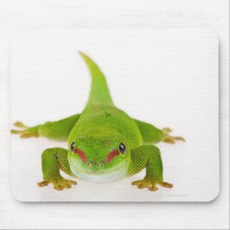 Madagascar day gecko (Phelsuma madagascariensis) Mouse Pad