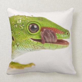 Madagascar day gecko (Phelsuma madagascariensis Pillows