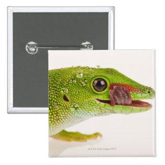 Madagascar day gecko (Phelsuma madagascariensis Pinback Button
