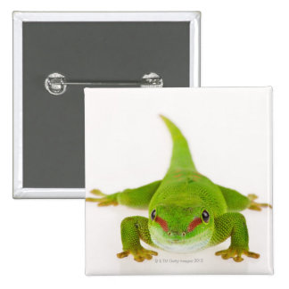 Madagascar day gecko (Phelsuma madagascariensis) Pinback Button