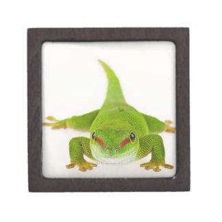 Madagascar day gecko (Phelsuma madagascariensis) Premium Trinket Boxes
