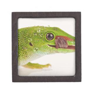 Madagascar day gecko (Phelsuma madagascariensis Premium Trinket Box