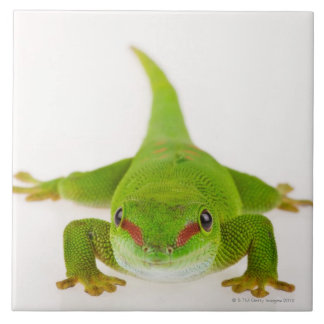 Madagascar day gecko (Phelsuma madagascariensis) Ceramic Tiles