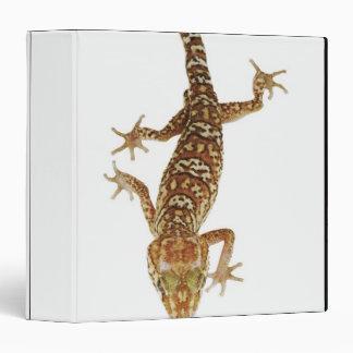 Madagascar ground gecko (Paroedura pictus) on 3 Ring Binder