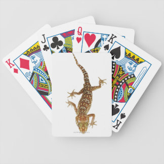 Madagascar ground gecko (Paroedura pictus) on Bicycle Playing Cards