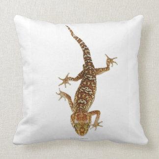 Madagascar ground gecko (Paroedura pictus) on Pillow