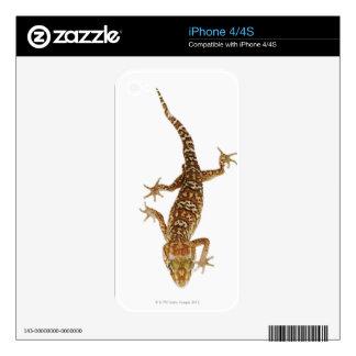 Madagascar ground gecko (Paroedura pictus) on iPhone 4 Skin