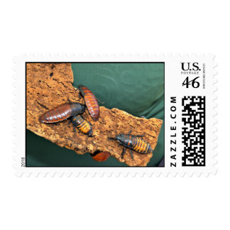 Madagascar hissing cockroaches postage stamp