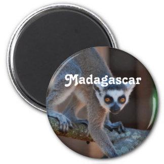 Madagascar Lemur 2 Inch Round Magnet