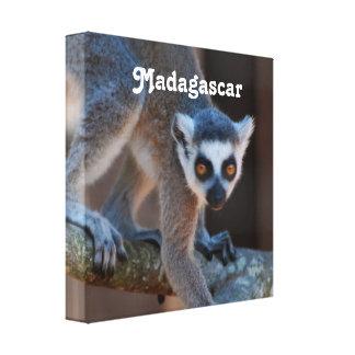 Madagascar Lemur Canvas Prints