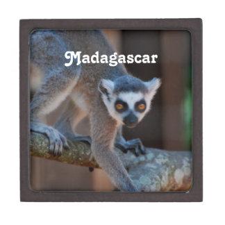Madagascar Lemur Premium Gift Boxes