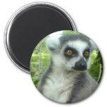 Madagascar Lemur Round Magnet Magnets