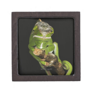 Madagascar Premium Jewelry Box