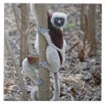 Madagascar, reserva de Ankarafantsika; Ampijoroa; Azulejos