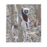 Madagascar, reserva de Ankarafantsika; Ampijoroa; Libretas Para Notas