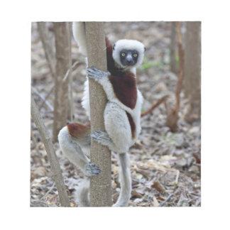 Madagascar, reserva de Ankarafantsika; Ampijoroa; Blocs De Notas