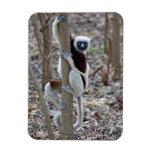 Madagascar, reserva de Ankarafantsika; Ampijoroa; Iman De Vinilo