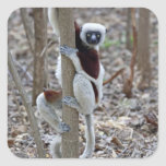 Madagascar, reserva de Ankarafantsika; Ampijoroa; Calcomanía Cuadradas