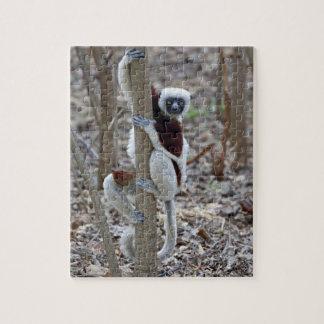 Madagascar, reserva de Ankarafantsika; Ampijoroa; Puzzles