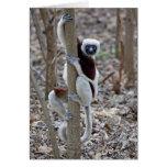 Madagascar, reserva de Ankarafantsika; Ampijoroa; Tarjeta