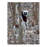 Madagascar, reserva de Ankarafantsika; Ampijoroa; Postal