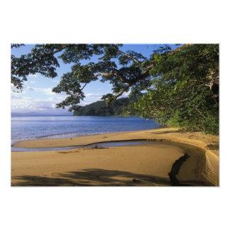 Madagascar, reserva especial Nosy de Mangabe, ence Cojinete